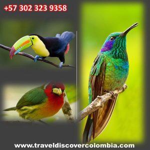 birdin-watching-incolombia